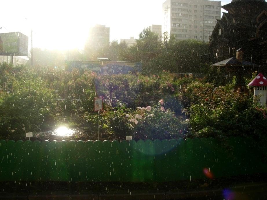 20f68693c5aa В Мире Увлечений возможен и солнечный дождь и даже Aspirin-Rose в солнечном  шаре!!!!! ))