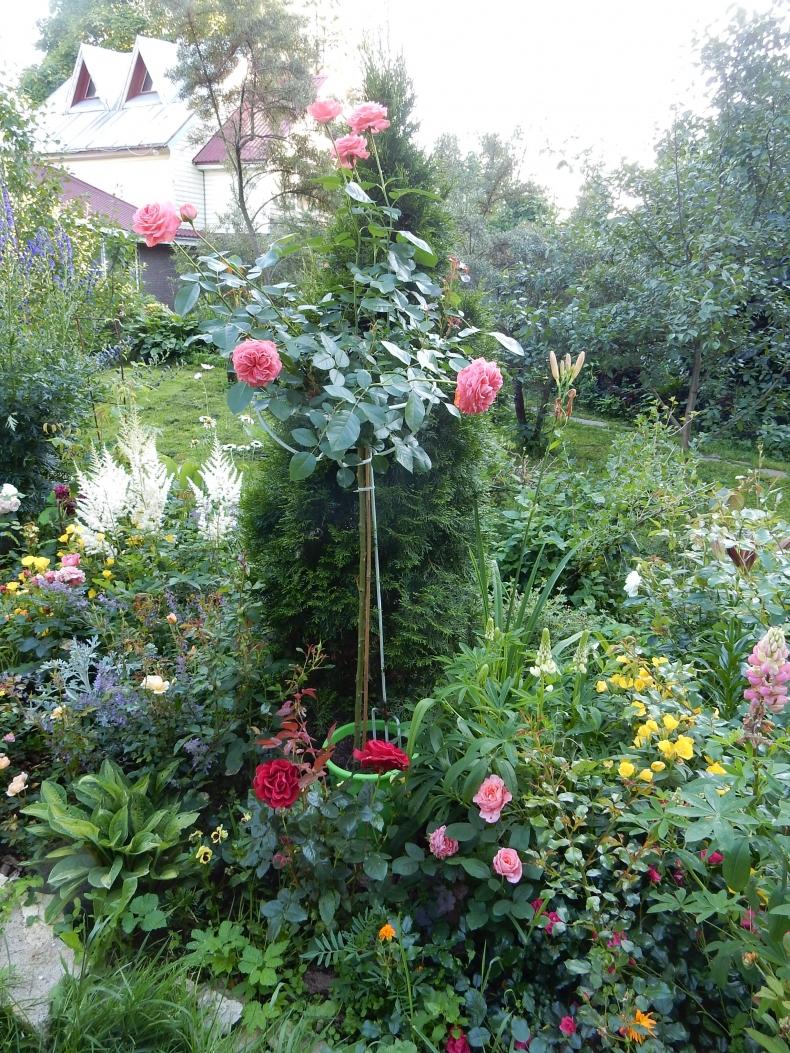 Опоры для штамбовых роз своими руками фото 23