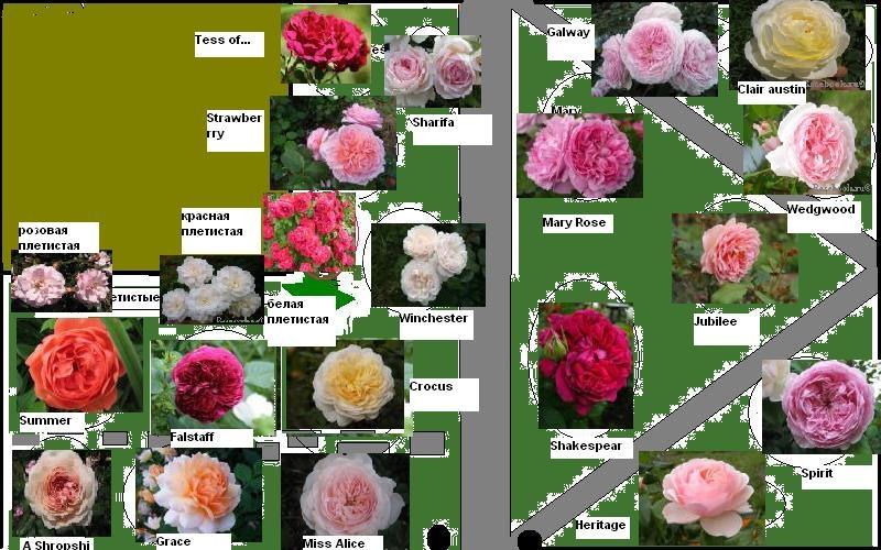 схему крупные фото цветов.