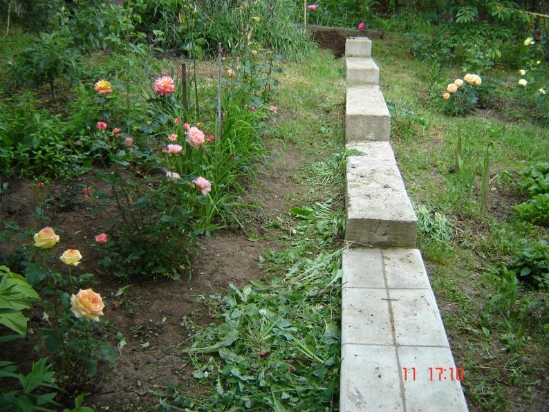 Коле надо посадить 350 кустов роз ежедневно он сажает на одно и тоже