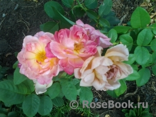 Цветы Вашим дамам - устраиваю личную жизнь форумчан;)