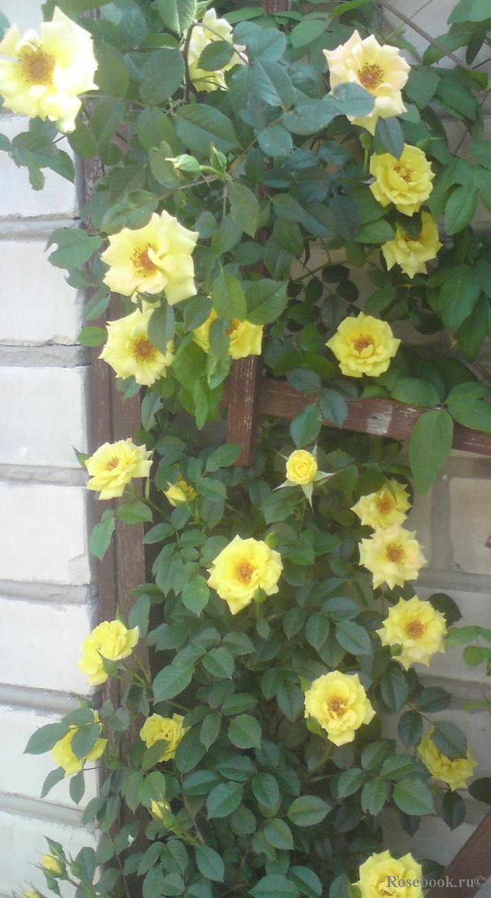 Арки для розы своими руками