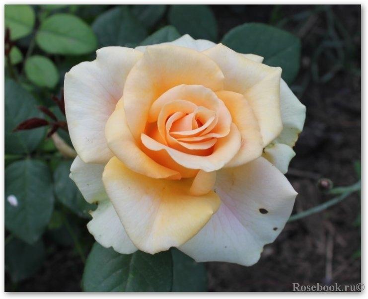 Смотреть онлайн rose monroe 18 фотография