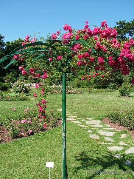 Опоры для штамбовых роз своими руками фото 13