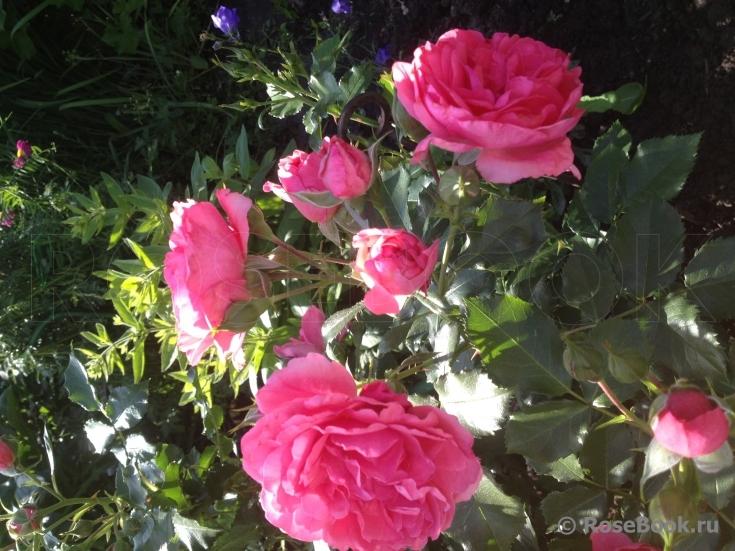 chat für ältere singles Bensheim