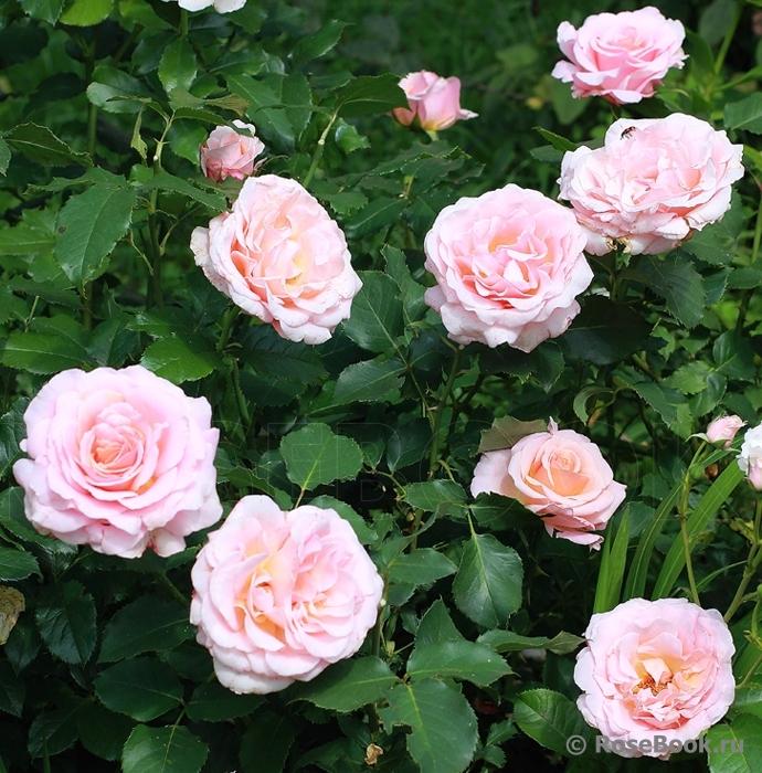 rosa parks thesis essay