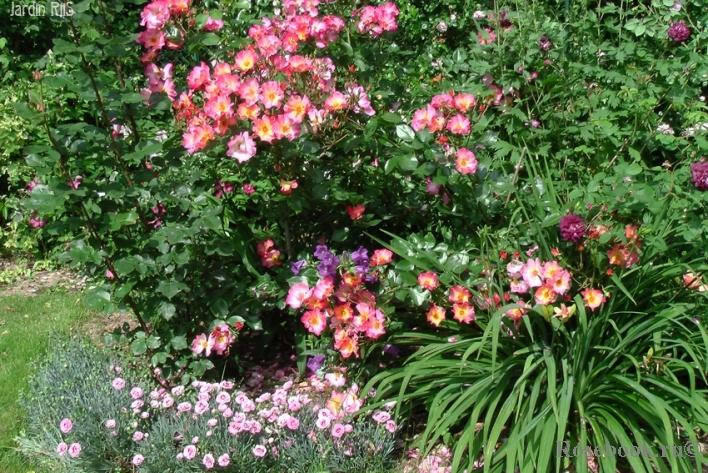 Yann arthus bertrand роза