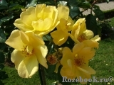 Yellow Fleurette