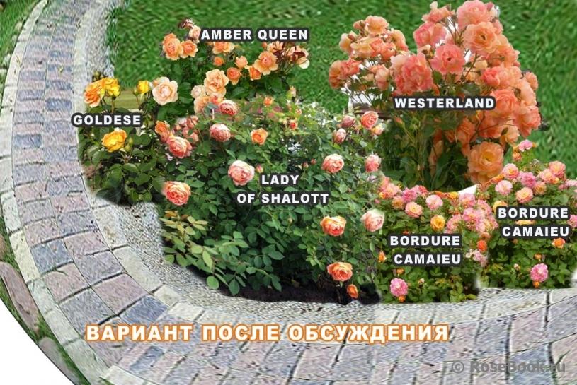 Розарий на даче и схемы