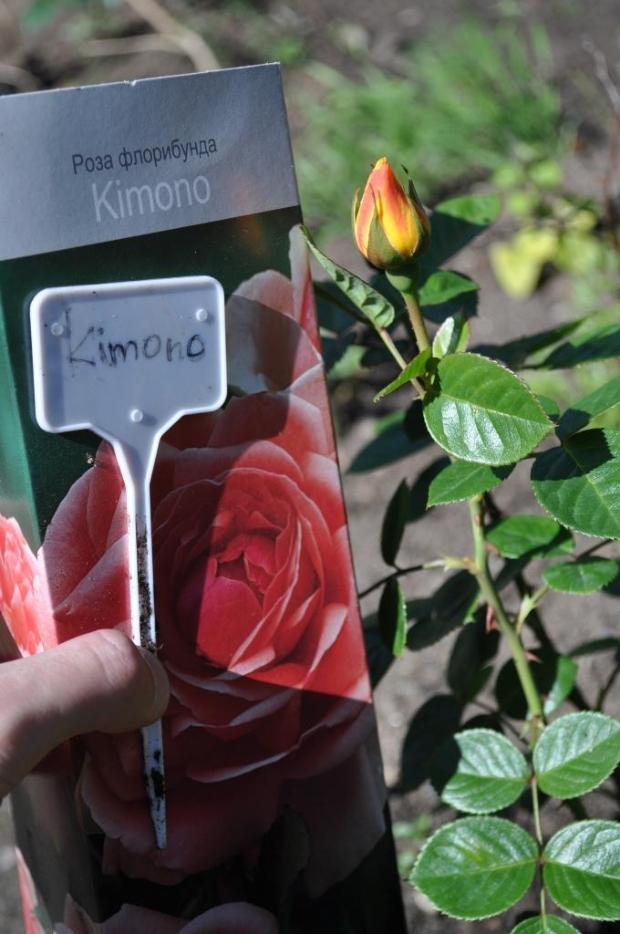 Купить розы в ооо ланасад засушенные цветы купить киев