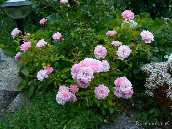 Fairy garden: заманите фею в сад