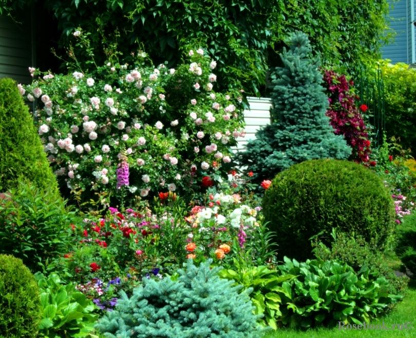 фото красивые сады подмосковья