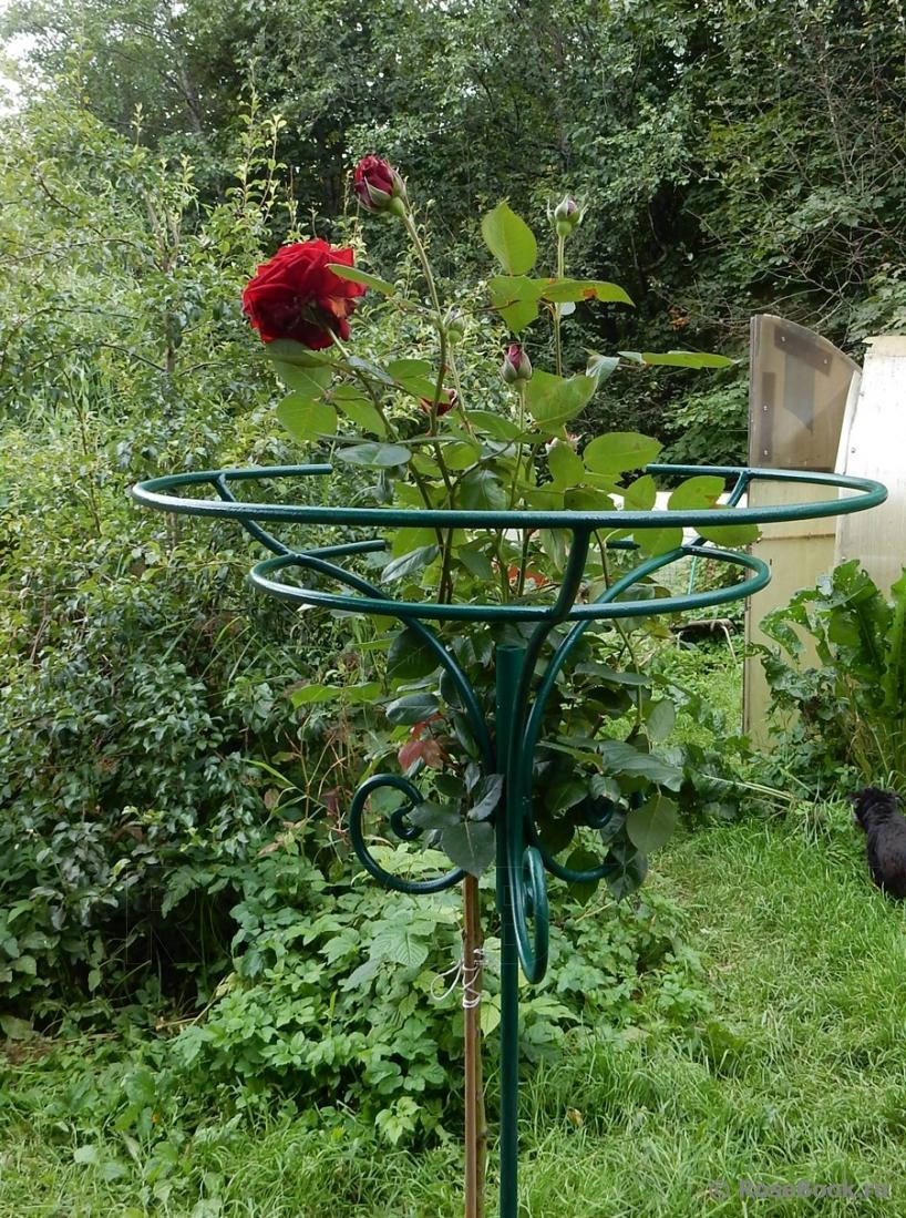 Опоры для штамбовых роз своими руками фото 51